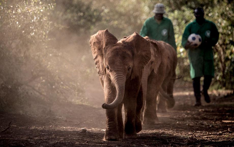 Baby elephant in Kenya during a Family Safari