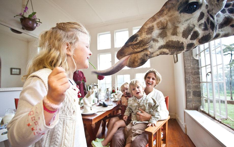 Giraffe stealing icecream at Giraffe Manor