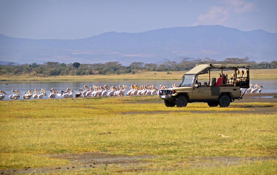 Safari Game drive during a Family Safari in Africa