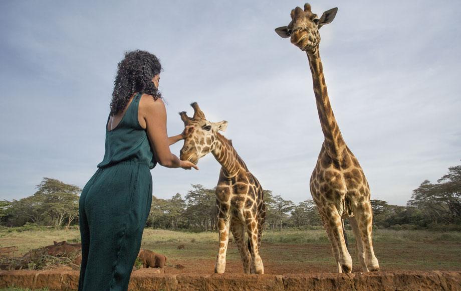 Patting Giraffes at Giraffe Manor