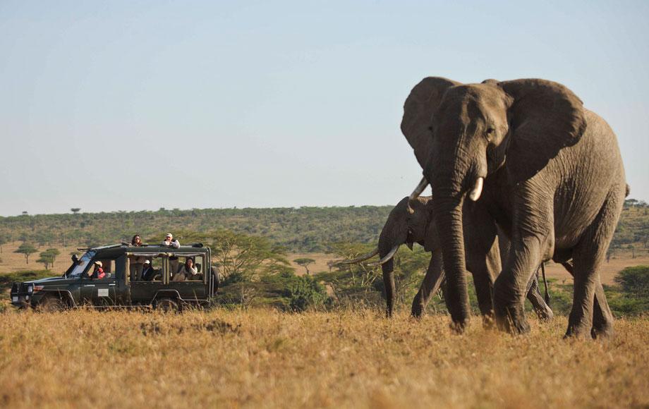 Elephant at Kicheche Laikipia
