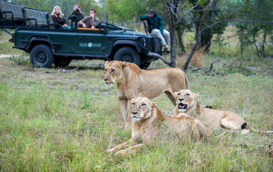 Lion encounter in the Kruger National Park