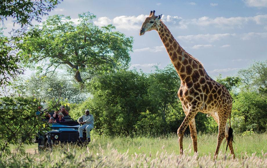 Giraffe encounter in the Kruger National Park