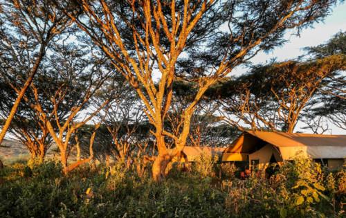 Tent at Luxury Lemala Ngorongoro in Tanzania