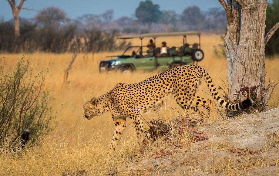 Gamedrive at Luxury Linkwasha Camp in Hwange National Park, Zimbabwe