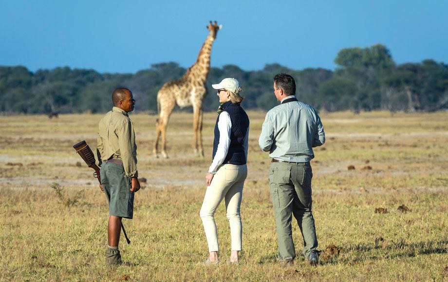 Walking safari at Luxury Linkwasha Camp in Hwange National Park, Zimbabwe