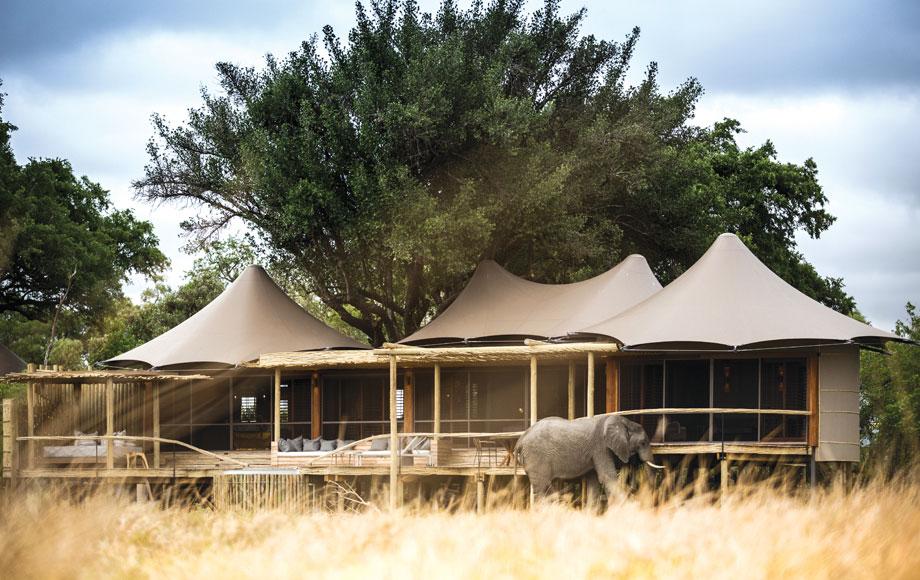 Elephant at Little Mombo Camp