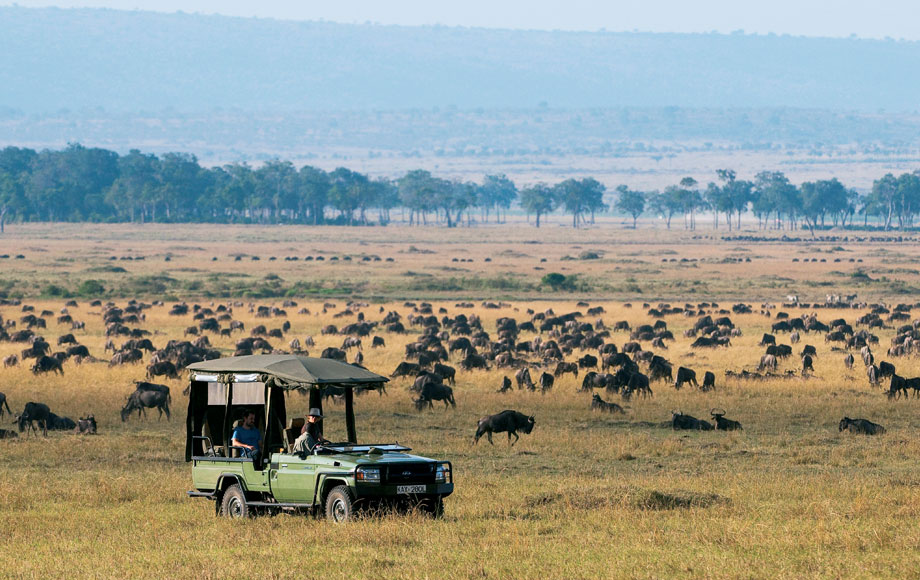 Wildebeest Migration at Mara Expeditions Camp