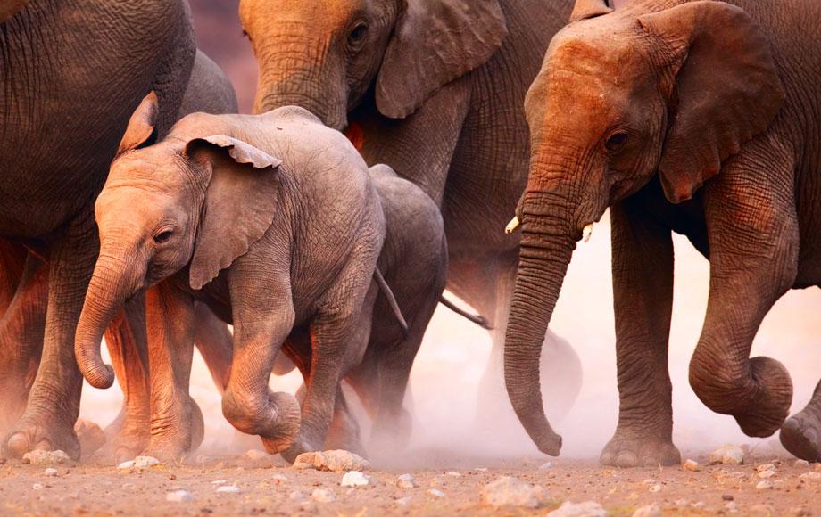 herd of elephants at Etosha National Park in Namibia
