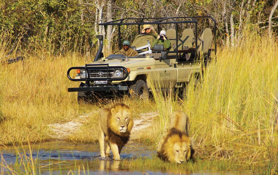 Lion sighting during a safari