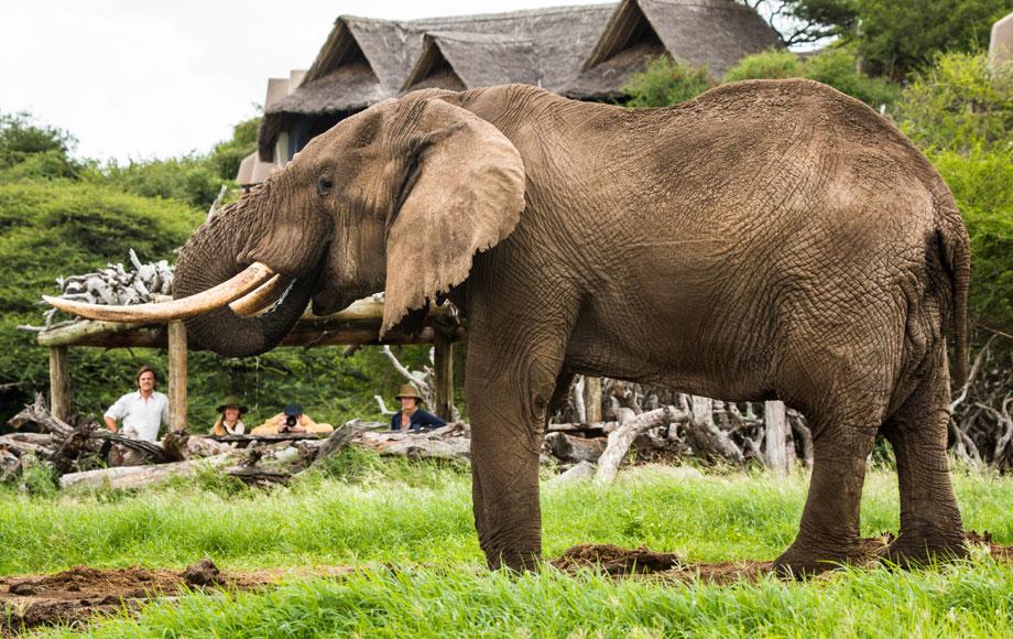 Elephant at Ol Donyo Lodge in Kenya