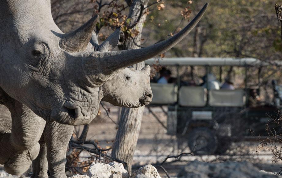 White Rhino at Ongava Lodge
