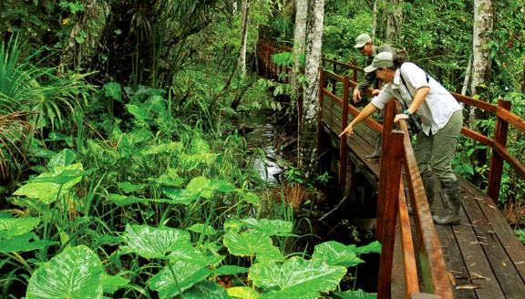 Rainforest Eco-Lodge