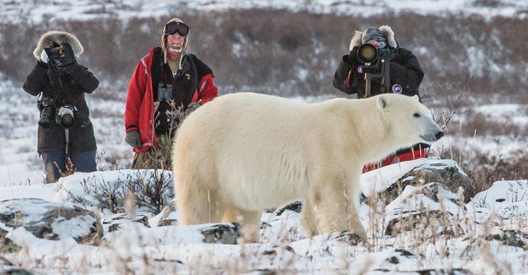 Polar Bear encounter