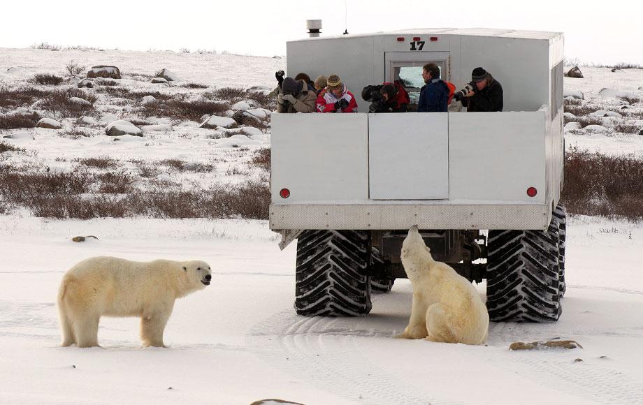 Polar Bear viewing from Tundra Buggies in Canada