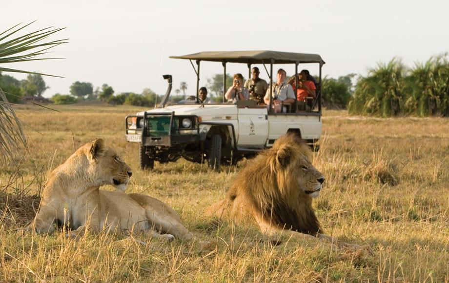 Lion sighting on safari