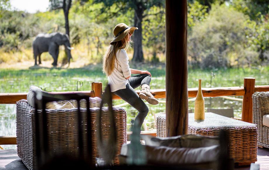 Wild elephant roaming through Camp