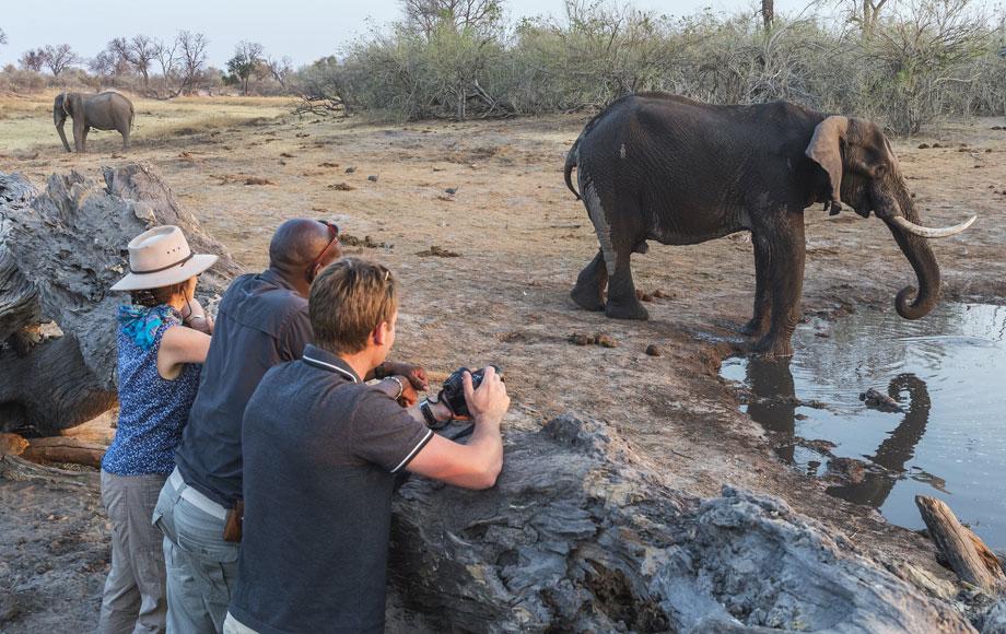 Elephant Hide at Savuti Camp