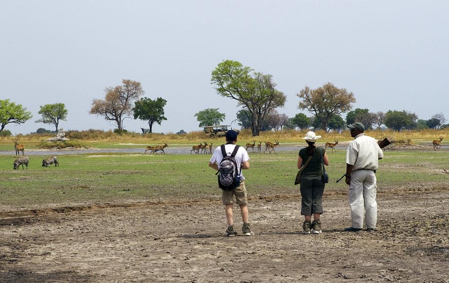 Walking Safari at Shinde Camp