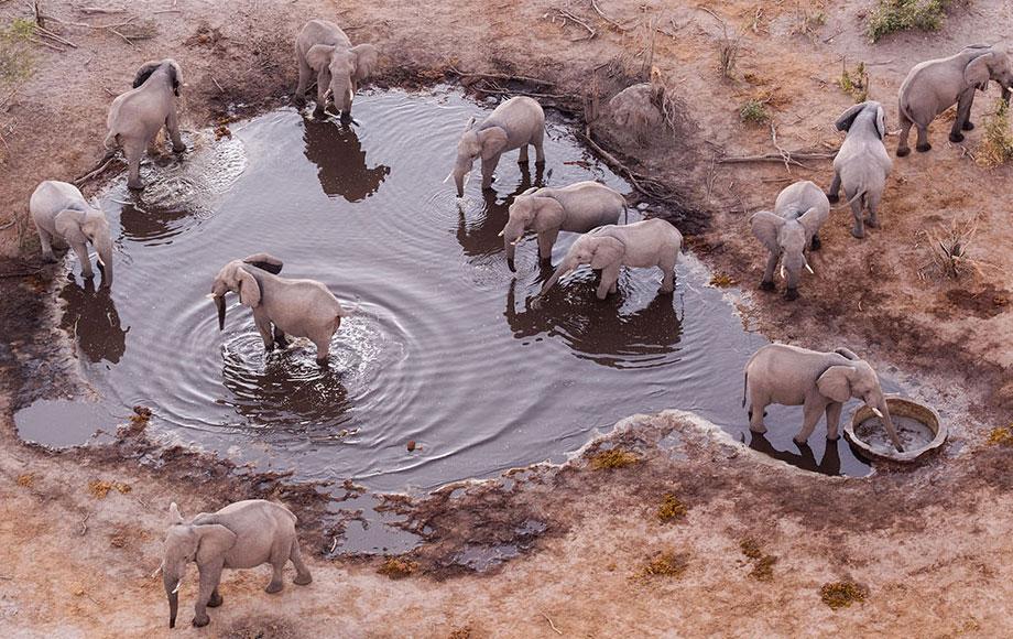 Elephants in a waterhole