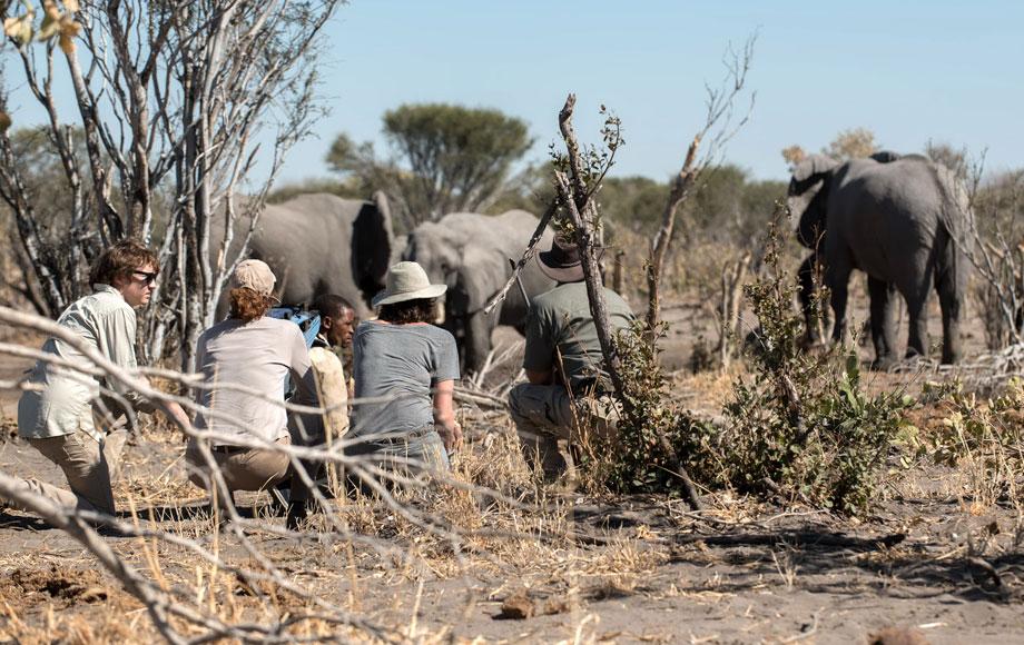 Walking Safari and getting close to elephants