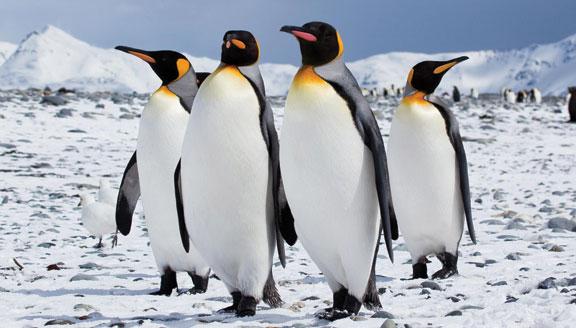 Falklands, South Georgia & Peninsula