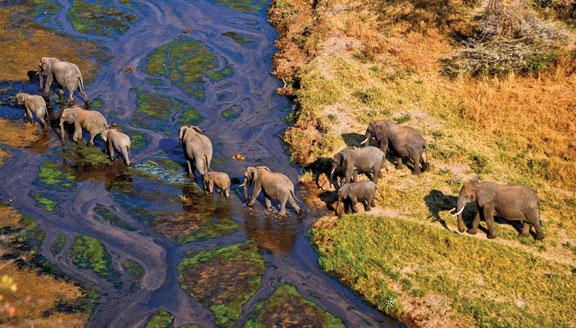 Herd of elephants crossing river in Tarangire National Park