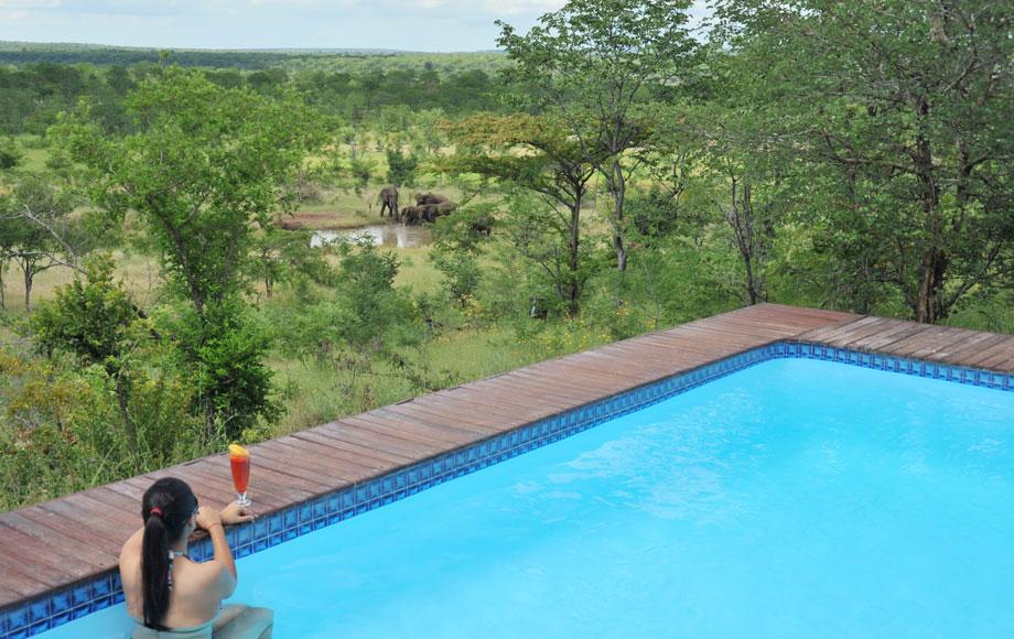 The Elephant Camp Pool in Zimbabwe