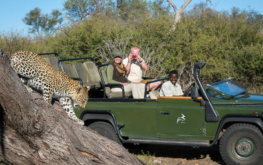 Tubu Tree Leopard Sighting