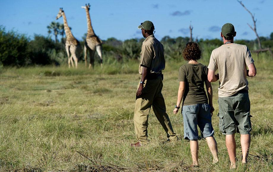 Tubu Tree Walking Safari