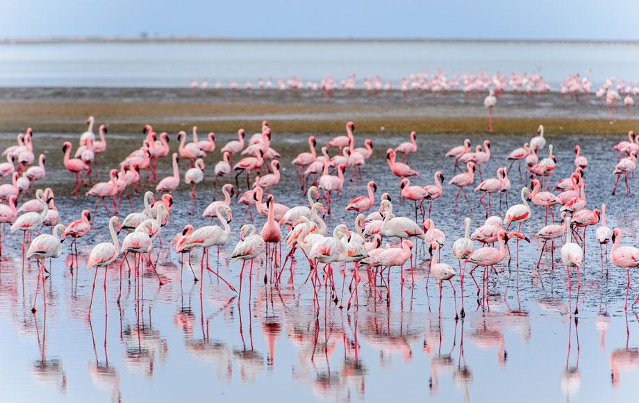 Flamingos in Namibia