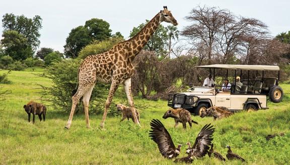 Wilderness Okavango Safari