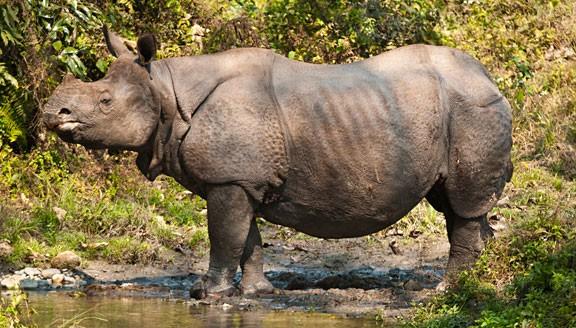 Rhino Trail