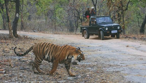 India wildlife safaris