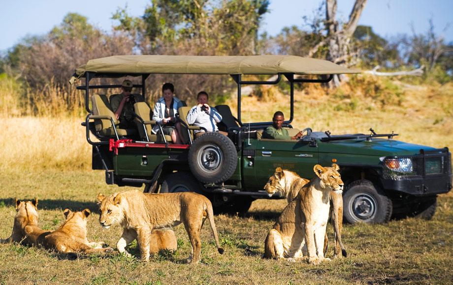 Lions on Safari at Zafara Camp